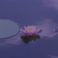 Pay Online in Advance: Meditation/Guided imagery £65 mins (75mins)